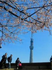 金籐清花  公式ブログ/一番桜 画像3