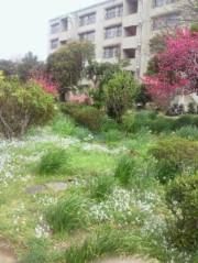 金籐清花  公式ブログ/春の空気 画像3