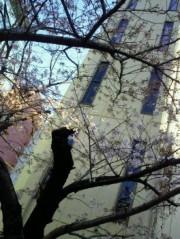 金籐清花  公式ブログ/桜桜 画像2