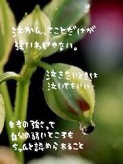 金籐清花  公式ブログ/ありがとうございます 画像3