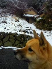 金籐清花  プライベート画像/幸せな景色 2011-03-06 13:50:49