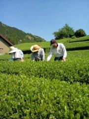 金籐清花  公式ブログ/茶摘み(*´∀`*) 画像1