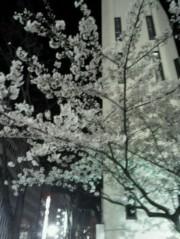 金籐清花  公式ブログ/春ー(´ω`)☆彡 画像1