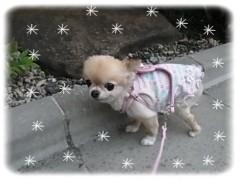 木戸美歩 公式ブログ/さくらのお散歩 画像1