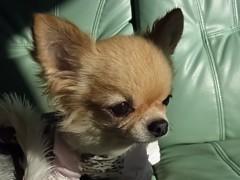 木戸美歩 公式ブログ/愛犬さくら 画像1