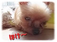 木戸美歩 公式ブログ/エクスパンドムービー 画像2