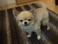 木戸美歩 公式ブログ/さくらさん 2 画像1