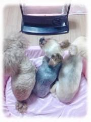 木戸美歩 公式ブログ/写真が。。。 画像1