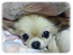 木戸美歩 公式ブログ/ありがとうございます☆彡 画像1