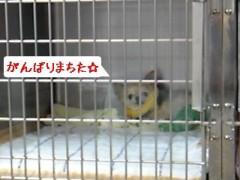 木戸美歩 公式ブログ/ありがとうございます(u_u)o〃 画像1
