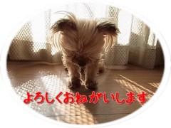 木戸美歩 公式ブログ/動物愛護法改正への。。。 画像1
