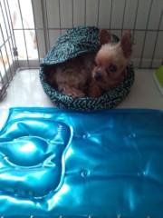 木戸美歩 公式ブログ/うさぎのベッド 画像1