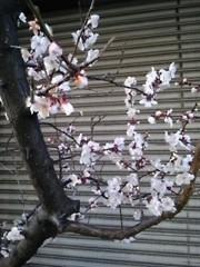 木戸美歩 公式ブログ/静岡でも。。。 画像1