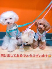 木戸美歩 公式ブログ/ご挨拶が遅くなりました。。。 画像1