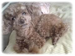 木戸美歩 公式ブログ/モデル犬 画像1