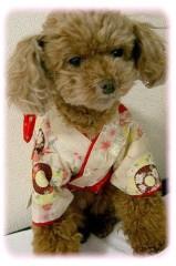 木戸美歩 公式ブログ/明けましておめでとうございます♪ 画像1