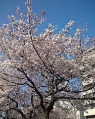 木戸美歩 公式ブログ/お花見とドッグカフェ 画像1