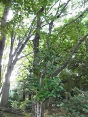 木戸美歩 公式ブログ/写真 画像1