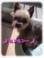 木戸美歩 公式ブログ/ココさんその後。。。 画像1