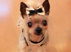木戸美歩 公式ブログ/ココがお星様になりました 画像1