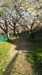 優希 公式ブログ/小町とお花見(*≧∀≦*) 画像2