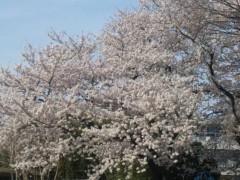 優希 公式ブログ/桜ラララ〜 画像1