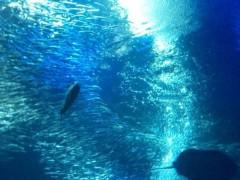 優希 公式ブログ/水族館の写真 画像2