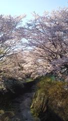 優希 公式ブログ/小町とお花見(*≧∀≦*) 画像3