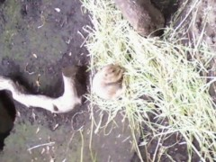 優希 公式ブログ/上野動物園のパンダさん 画像2