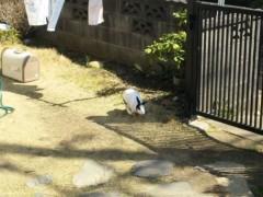 優希 公式ブログ/お散歩中の…?o(^-^)o 画像1