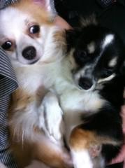 中村龍介 公式ブログ/THE 犬's o(^-^)o 画像1