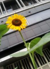 鈴木日和子 公式ブログ/*向日葵* 画像3