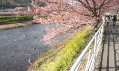 中村高華 公式ブログ/春〜♪ 画像1