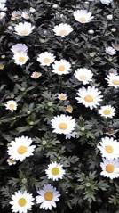 一石二鳥 公式ブログ/お花も綺麗です 画像1