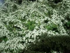 一石二鳥 公式ブログ/春到来ですね 画像1