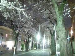 一石二鳥 公式ブログ/やっぱり桜はいいなぁ 画像2