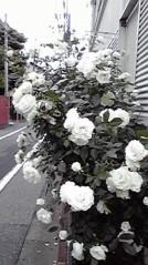 一石二鳥 公式ブログ/爽やかなお天気でした 画像2