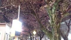 一石二鳥 公式ブログ/桜レポートです 画像2