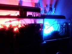 一石二鳥 公式ブログ/夜の熱帯魚水槽 画像1