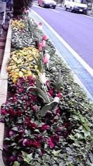 一石二鳥 公式ブログ/お花も綺麗です 画像3