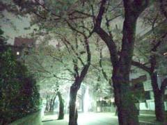 一石二鳥 公式ブログ/やっぱり桜はいいなぁ 画像1