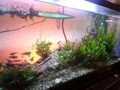 一石二鳥 公式ブログ/熱帯魚に癒やされます 画像1