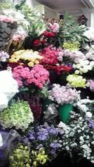 一石二鳥 公式ブログ/お花買ってきました 画像2
