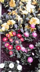 一石二鳥 公式ブログ/お花も綺麗です 画像2