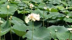 一石二鳥 公式ブログ/花が咲いたよ 画像1