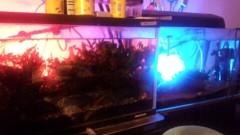 一石二鳥 公式ブログ/熱帯魚水槽 画像1