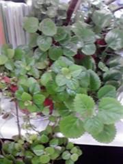 一石二鳥 公式ブログ/観葉植物 画像1
