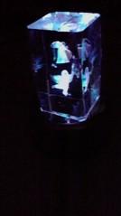 一石二鳥 公式ブログ/地震がきました花瓶がおちた! 画像1