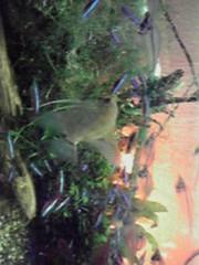 一石二鳥 公式ブログ/熱帯魚を飼育しています 画像2