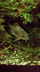 一石二鳥 公式ブログ/熱帯魚は涼しげです 画像1